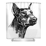 Doberman-pincher-portrait Shower Curtain