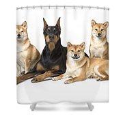 Doberman Pinscher And Friends Shower Curtain