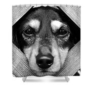 Doberman Puppy In Fence Shower Curtain
