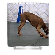 Dobie Retrieving Dumbbell Shower Curtain