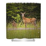 Doe And Fawn Along A Roadside Near Iron Mountain Michigan. Shower Curtain