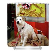 Dog At Carnival Shower Curtain