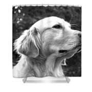 Dog Black And White Portrait Shower Curtain