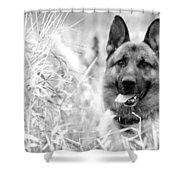 Dog In Field Shower Curtain