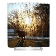 Dog In Morning Sun Shower Curtain