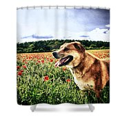 Dog In The Poppy Field Shower Curtain