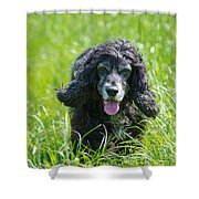 Dog On The Grass Shower Curtain