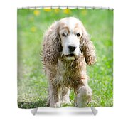 Dog On The Green Field Shower Curtain