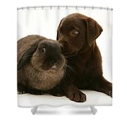 Dog Pup With Rabbit Shower Curtain