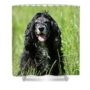 Dog Sitting On The Green Grass Shower Curtain
