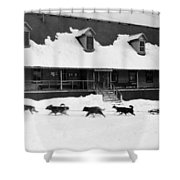Dog Sled Shower Curtain