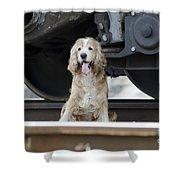 Dog Under A Train Wagon Shower Curtain
