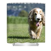 Dog Walking On The Green Grass Shower Curtain