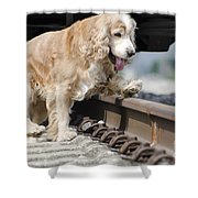 Dog Walking Over Railroad Tracks Shower Curtain