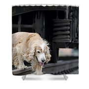 Dog Walking Under A Train Wagon Shower Curtain