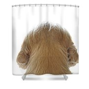 Dog Watching Out Shower Curtain