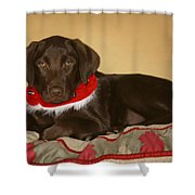 Dog With Christmas Collar Shower Curtain