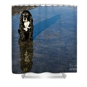 Dog With Reflections And Shadow Shower Curtain