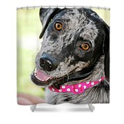 Doggone Cute Shower Curtain