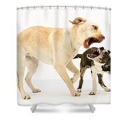 Dogs Playing Shower Curtain by Mark Taylor