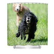 Dogs Running On The Green Field Shower Curtain