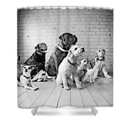 Dogs Watching At A Spot Shower Curtain by Sumit Mehndiratta