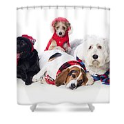Dogs Wearing Winter Accessories Shower Curtain