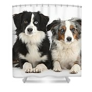 Dogs With Different-colored Eyes Shower Curtain