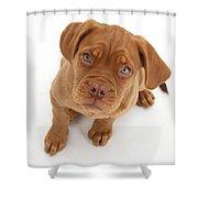 Dogue De Bordeaux Puppy Shower Curtain