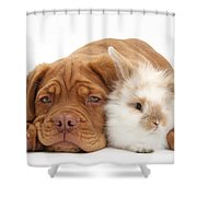 Dogue De Bordeaux Puppy With Bunny Shower Curtain