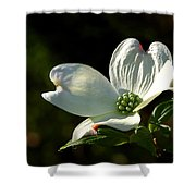 Dogwood Bloom At Sunrise Shower Curtain