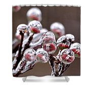 Dogwood Blooms - Sealed In Ice Shower Curtain