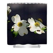Dogwood Blossom - Beelightful Shower Curtain
