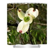 Dogwood Blossome Shower Curtain