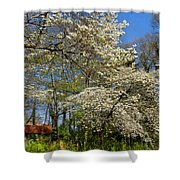 Dogwood Grove Shower Curtain by Debra and Dave Vanderlaan