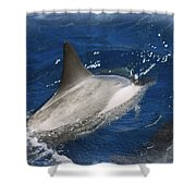 Dolphin Escort Shower Curtain