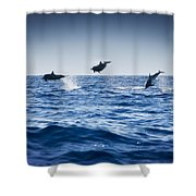 Dolphins Playing In The Ocean Shower Curtain