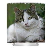 Domestic Cat Felis Catus Portrait Shower Curtain