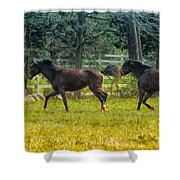 Domestic Horses Shower Curtain