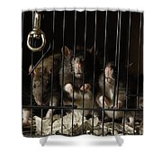 Domestic Rats At The George M. Sutton Shower Curtain