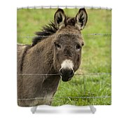 Donkey - The Beast Of Burden Shower Curtain