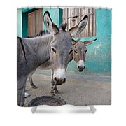 Donkeys, Harar, Ethiopia, Africa Shower Curtain