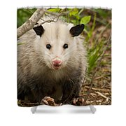 Don't Mess With Me Opossum Shower Curtain