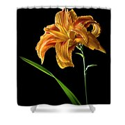 Double Day Lily Shower Curtain