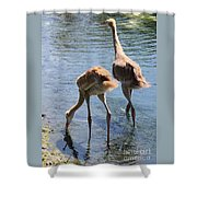 Sandhills Double Dipping Shower Curtain