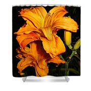 Double Orange Daylilies Shower Curtain