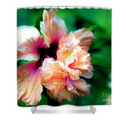 Double Peach Hibiscus Five Shower Curtain