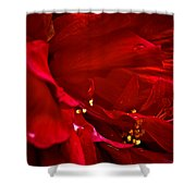 Double Red Shower Curtain