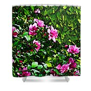 Double Rose Of Sharon Shower Curtain