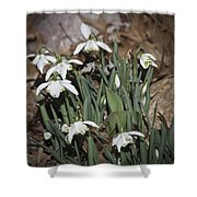 Double Snowdrops Squared Shower Curtain